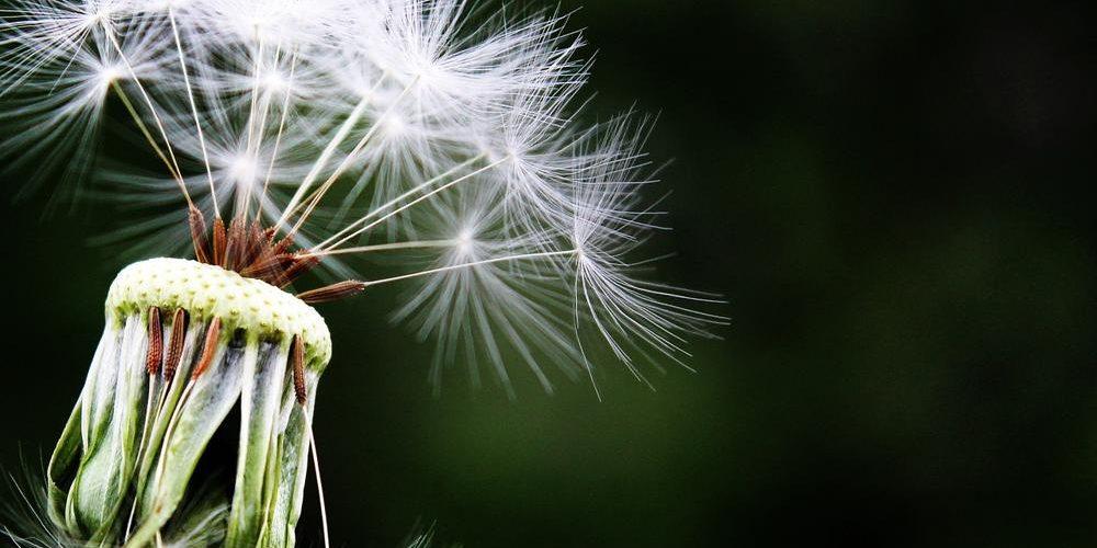 Combattere l'allergia con delle pratiche mascherine